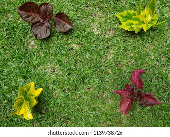 leaves of plants in green with yellow, purple and red with grass background
