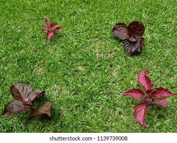 leaves of plants in purple and red with grass background