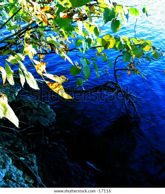 Leaves reflected against the blue background of water. The sun is shining on the water, creating a gradient effect. The water reflects a blue tone on the gray stones surrounding the bank of the river. This was taken in early fall.