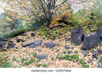 Leaves and rocks. Autumn yellow dry leaves on a pile of stones.