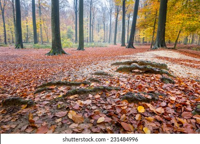 Leaves, roots and beech trees in the forest