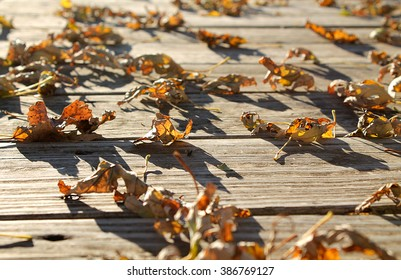Leaves scattered on a deck