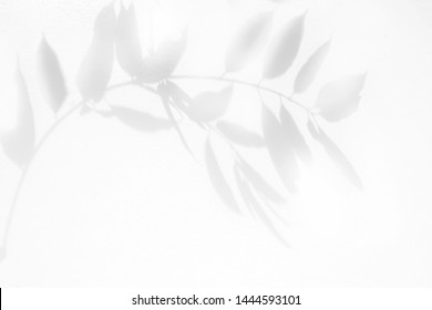 Leaves shadow and branch background on white wall texture , black and white, monochrome, nature shadow art on wall