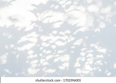 Leaves shadow and tree branch background.  Natural leaves tree branch shadows and sunlight dappled on white concrete wall texture for background wallpaper and any design
