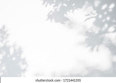 Leaves shadow and tree branch background.  Natural leaves tree branch dark shadow and light from sunlight dappled on white wall texture for background wallpaper and any design