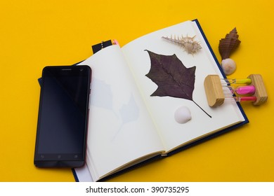 Leaves with shells placed on the book.