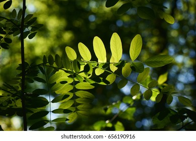 Leaves / Leaves silhouette