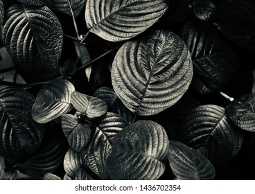 Leaves of a small plant black and white natural photo