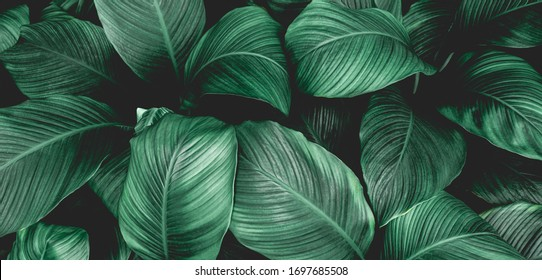 Wood Leaf Background Images Stock Photos Vectors Shutterstock Affordable and search from millions of royalty free images, photos and vectors. https www shutterstock com image photo leaves spathiphyllum cannifolium abstract green texture 1697685508