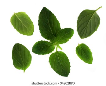 Leaves of the spearmint plant, used in cooking, for a background or design element