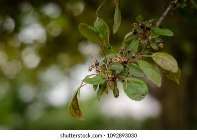 leaves and stamen on a flowering tree - landscape