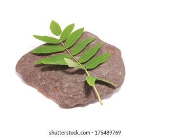 leaves and stone on white background