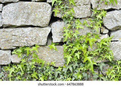 Leaves and stones walls