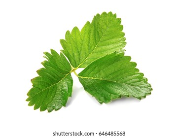 Leaves of strawberry on white background