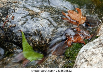 Leaves in a stream