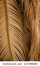 The leaves of the swaying palm tree