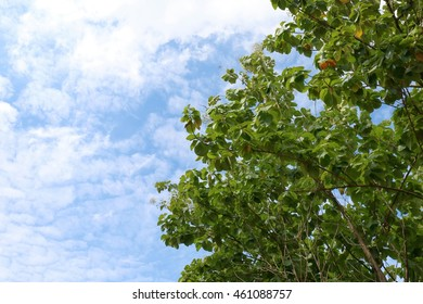 Leaves teak tree on side sky background spacing for copy Text Message