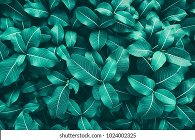 leaves texture background, blue tone