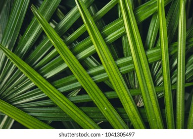 Leaves texture in nature green fresh blackground