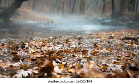 Leaves that have fallen into flowing stream water