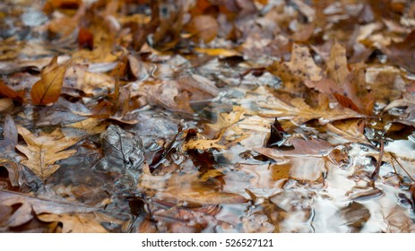 Leaves that have fallen in a stream during autumn