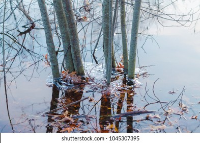 leaves in a thawing lake