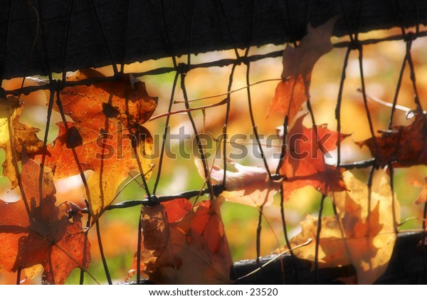Leaves trapped in a fence on a windy day.