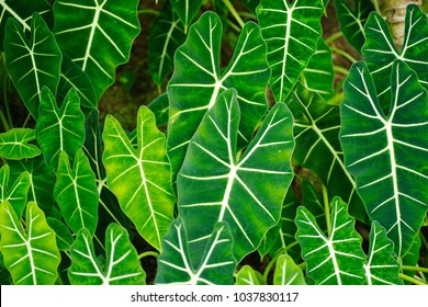 Leaves of the tropical plants - Shutterstock ID 1037830117