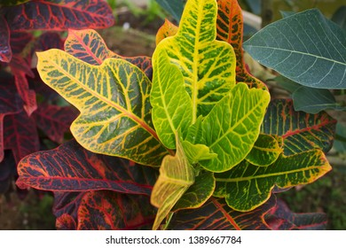 Leaves of the tropical plants - Shutterstock ID 1389667784