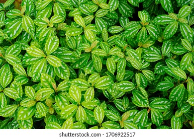Leaves of the tropical plants - Shutterstock ID 1706922517
