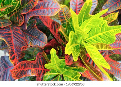 Leaves of the tropical plants - Shutterstock ID 1706922958