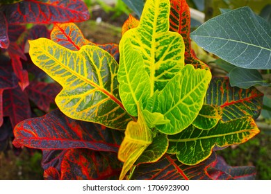 Leaves of the tropical plants - Shutterstock ID 1706923900