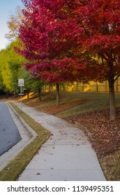 Leaves turn red along the sidewalk of a suburban neighborhood