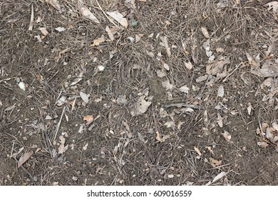 Leaves and twigs on ground background texture