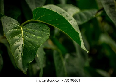 Leaves with water on them