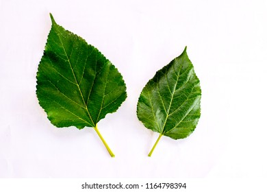 Leaves with white backdrop