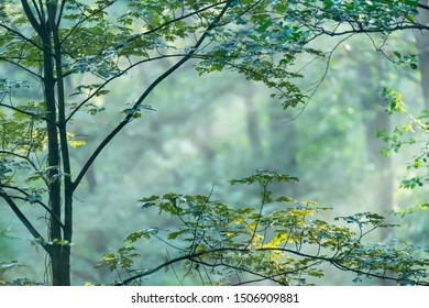Leaves of young tree in foggy forest in summer.