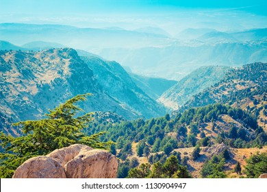 Lebanon mountains with cedar trees forest, Lebanon