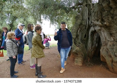 LECCE, ITALY - APR 9, 2019 - Tour guide describes the making of olive oil, Antica Masseria Brancati,Lecce, Puglia, Italy