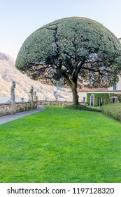 Lecco, Italy-April 1, 2018: Scenic Tree in garden of the famous Villa del Balbianello at Lecco, Lombardy