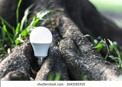 LED bulb in the forest nature background - Concept of saving energy , led bulb growing in nature