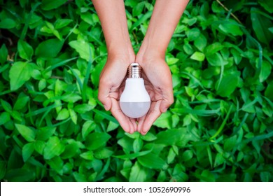 LED bulb in woman hand with green grass background