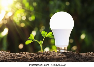 led light with young plant on soil. concept saving energy in nature