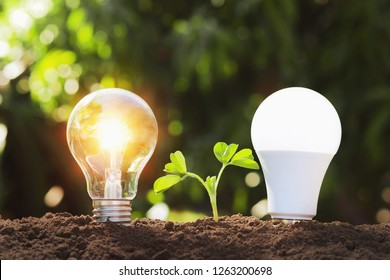led and lightbulb with young plant on soil. concept saving energy in nature