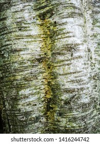 LEEDS, UK - JUNE 02, 2019: Tree bark at York Gate Garden, Adel, Leeds, West Yorkshire. York Gate is widely recognized as an outstanding example of 20th century garden design.