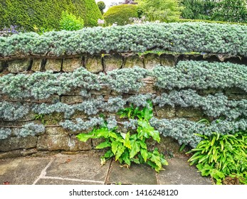 LEEDS, UK - JUNE 02, 2019: Espalier at York Gate Garden, Adel, Leeds, West Yorkshire. York Gate is widely recognized as an outstanding example of 20th century garden design.