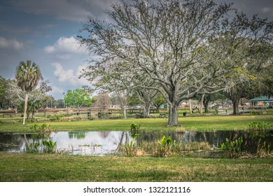 Leesburg Florida outdoor park in February. There are walking paths, ponds with small islands that have wooden bridges leading to them. There are Sandhill Cranes. Beautiful relaxing area.