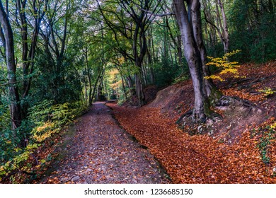Leete path at the loggerheads country park, Denbighshire, North Wales