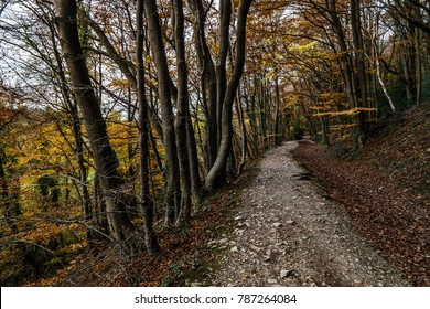 The Leete path near the Loggerheads country park, Denbighshire, North Wales UK.
