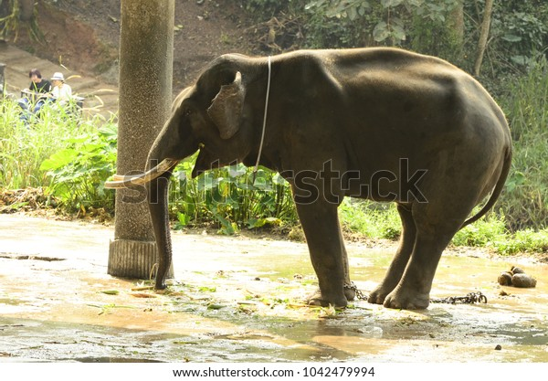 A left alone elephant is enjoy its time.